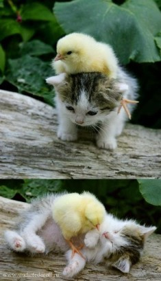 29 Examples Of Animals Helping Their Interspecies Friends